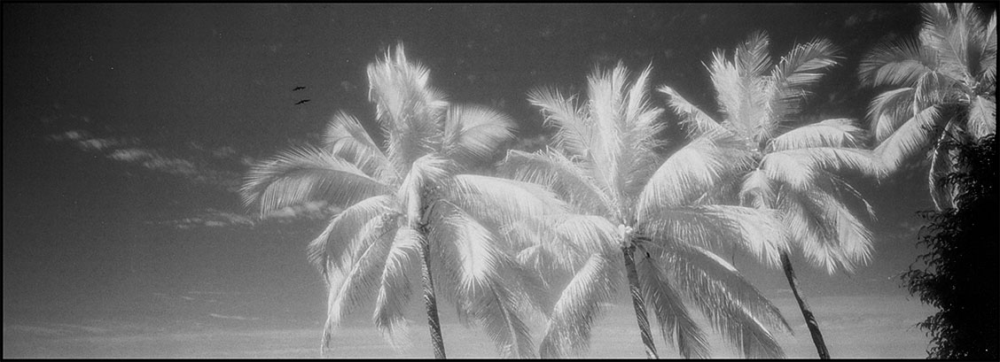 infrared film palm trees